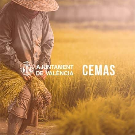 Diseño de la web corporativa de CEMAS