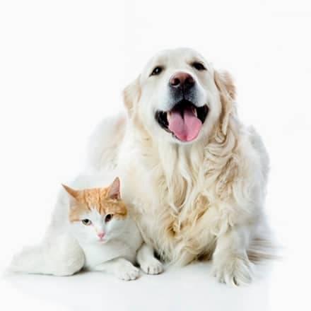 Desarrollo de Página Web del Gremio de comercios para animales de compañía de Valencia (Grecoacom)